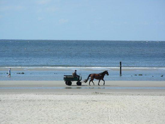Paard en wagen op het strand